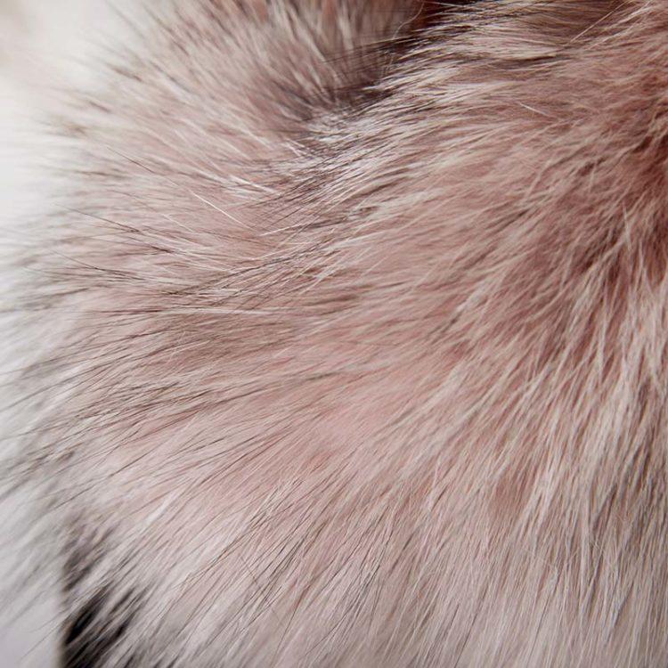Collo volpe rosa cipria produttori   Nicola Pelliccerie